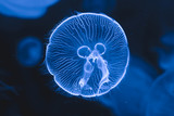 Beautiful jellyfish swimming in the water