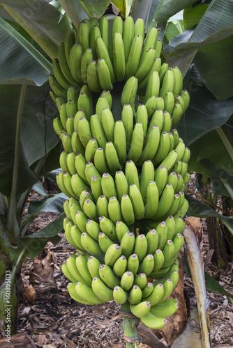 Aluminium Canarische Eilanden Banana Plantation