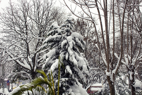 """View of trees under heavy snow at park called """"Macka Demokrasi Parki"""" in Istanbul Poster"""