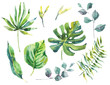 Set of watercolor green tropical leaves