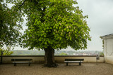 Two benches under a leafy acacia tree on the hill with a view of the city in Freising, Germany. - 160959616