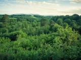 summer countryside morning,Northern Ireland