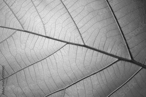 czarny-i-bialy-lisc-tekstury-wzor-dla-backgroun