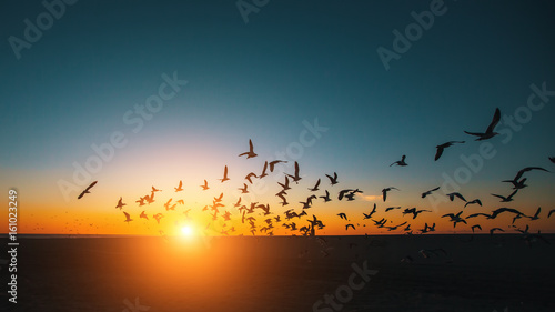 Silhouettes flock of Seagulls over the Sea during amazing sunset.