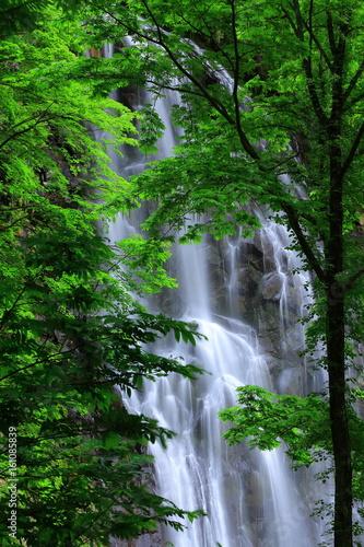 夏の立又渓谷 一の滝