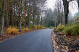 A deserted road in an autumn park.