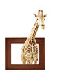 Giraffe in wooden frame with 3d effect - 161121298