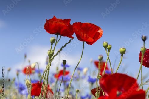 Blumenwiese mit blauem Himmel