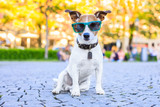 Sitting dog with cool sunglasses