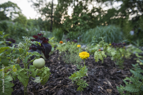 Urban garden with vegetables and flowers