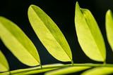 Green leaf natural background.