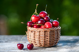 Basket with a cherry on a wooden table on a background of a green garden