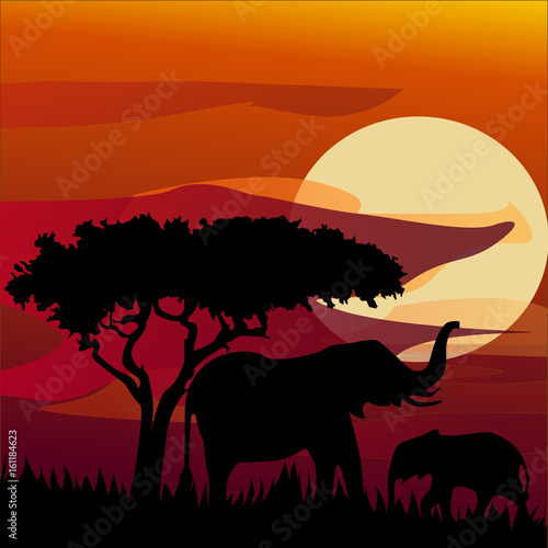 Aluminium Zoo silhouette view of elephant at sunset