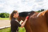 Girl is cleaning a horse - 161194437