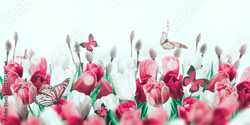 Fototapeta Multi-colored tulips with willow and butterflies. Easter flowers, floral background.
