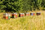 Bienenkästen auf grüner Wiese im Sommer
