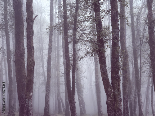 Foggy woods with beautiful light