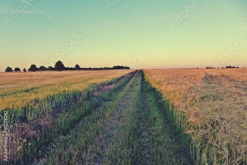 Poster Wiesenweg zwischen Getreidefeldern an einem Sommerabend