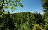 Wierzchołki zielonych drzew - krajobraz wzgórz w polskim lesie