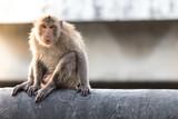 The Monkey in Bangkok Thailand