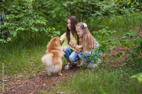 Two girl friends playing with a dog in a summer park