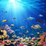 Underwater Scene With Coral Reef And Tropical Fish - 161347812