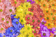 Colorful beautiful daisy flower bouqet background