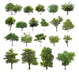 Collection of isolated tree on white background - 161474070