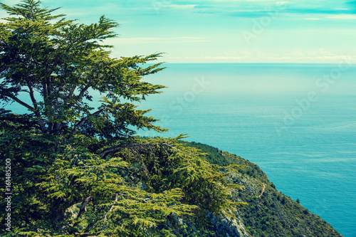 Pine tree on mountain against the sea