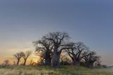 Sunrise at Baines Baobab's
