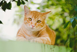 Cute orange cat in the garden