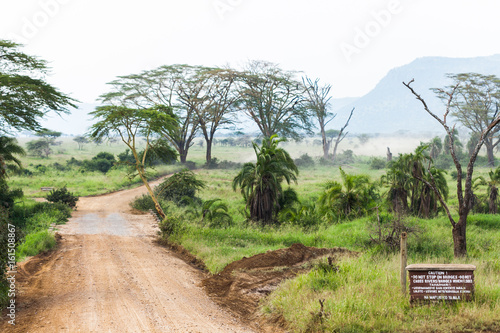 Safari road through Serengeti Nation park in Tanzania, Africa. Green landscape scenery during hot summer day .
