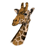 the head of a giraffe sketch vector graphics color picture brown - 161524617