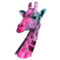 the head of a giraffe sketch vector graphics color pattern pink and blue