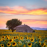 Valensole Plateau, Lavender and sunflowers field in summer, Provence, France