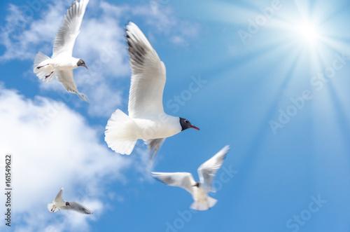 Leinwanddruck Bild Möwen fliegend mit Sonne