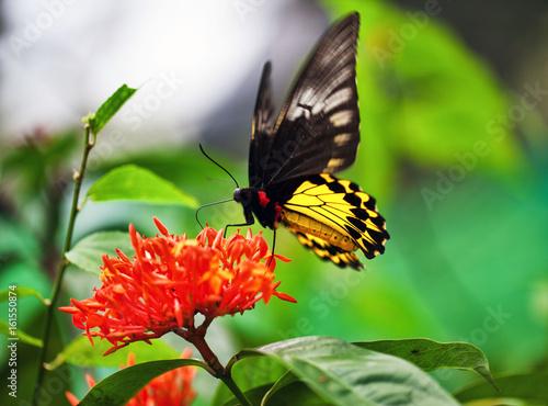 Motyl na czerwonym kwiacie