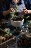 Succulents mini garden making step by step