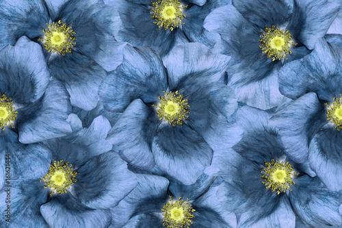 Naklejka Floral background . Blue flowers. Floral collage. Flower composition. Closeup. Nature.
