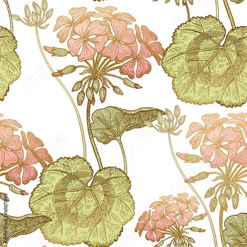 Geranium flowers. Seamless floral pattern. - 161671849