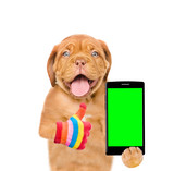 Funny puppy with smartphone showing thumbs up. Isolated on white background