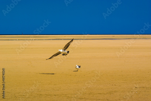 Foto op Aluminium Canarische Eilanden Seagulls on the beach Sotavento. Fuerteventura. Canary Islands. Spain