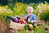 Fototapety Cute little boy holding fresh organic beet in domestic garden