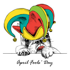 French Bulldog in a april fools' hat. Vector illustration.
