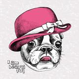 Portret francuski Bulldog w różowym eleganckim damskim kapeluszu.