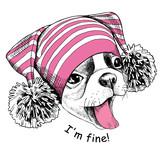 Buldog francuski w różowym kapeluszu z pomponem.