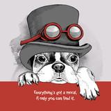 Portret francuski Bulldog steampunk  Kapelusz z okularami.
