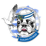 French bulldog portrait in a sailor's cap and with seagull on blue striped background. Vector illustration. - 161881409
