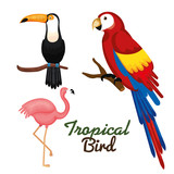Toucan guacamaya and flamingo over white background vector illustration - 161886866