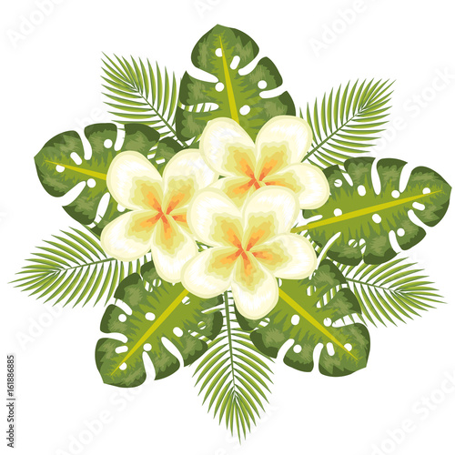 Yellow tropical flowers with leaves over white background vector illustration
